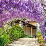 giardino bardini flowers